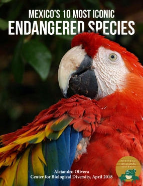 Mexico's 10 Most Iconic Endangered Species